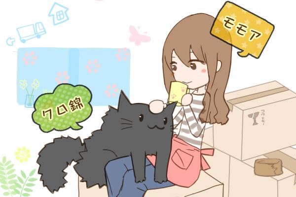 cat_kuronishiki_move_img_00